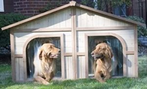 Best Dog House For Two Dogs