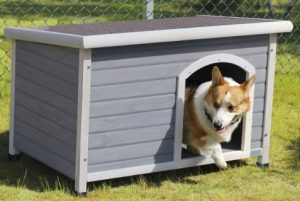 Best Heated Outdoor Dog House