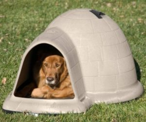 Best Summer And Winter Dog Houses