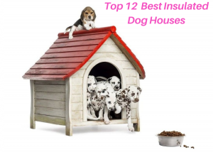Top Rated Insulated Dog Houses