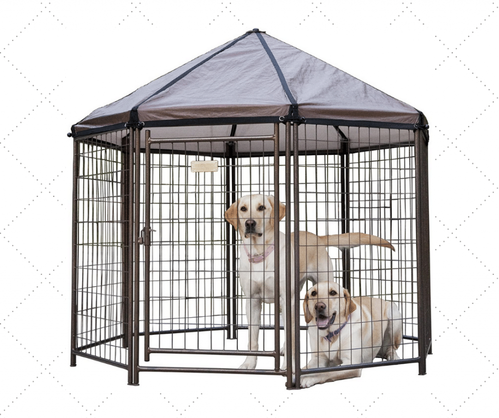 Best Outdoor Metal Dog Kennel For Two Dogs
