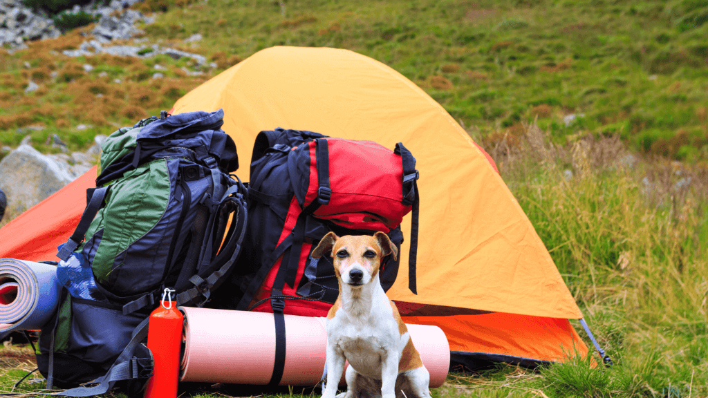 Camping With Dog Gears
