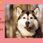 Dog House Guide For Huskies