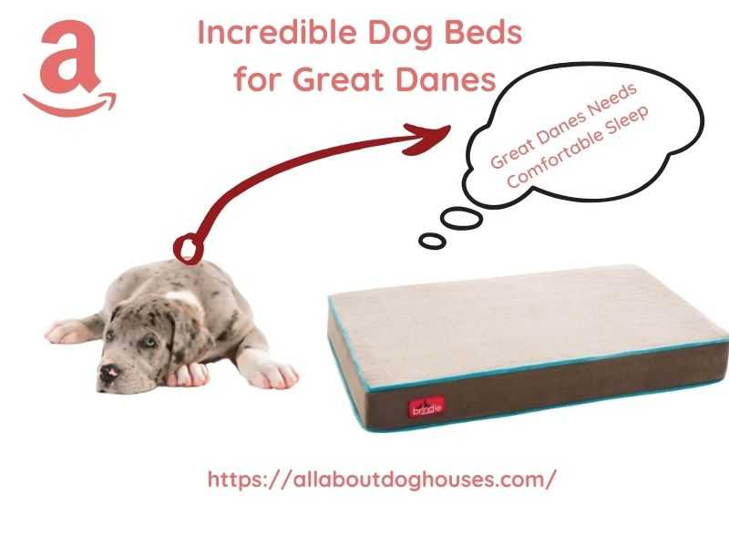 Best Dog Beds for Great Danes